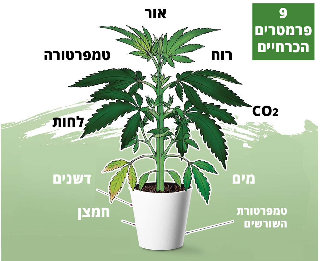 https://www.cannabeast.co.il/wp-content/uploads/2021/07/nutrients-s-1.png